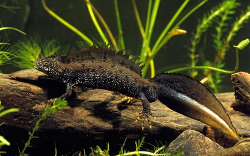 Is that a newt in your pocket?
