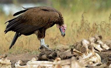 Vulture Funds Down to the Marrow