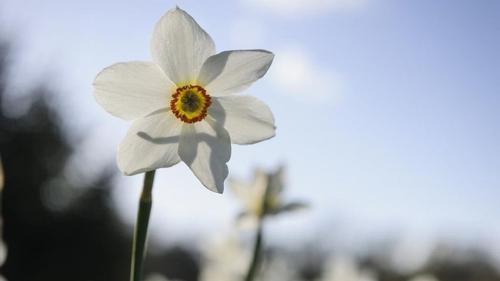 Gardening tips for better financial planning