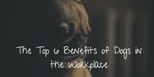 The top 6 benefits of letting your employees bring their dogs to work