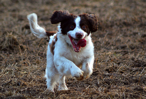 Dogs Trust Opposes Tail Docking Consultation