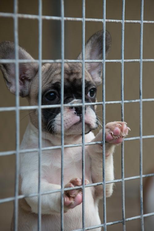 Puppy Smugglers Fill UK Quarantine Kennel