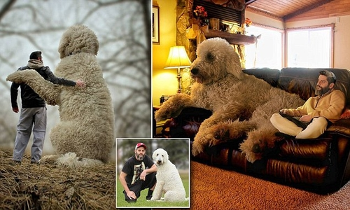Meet Dogs Trust's very own Cuddly Giant