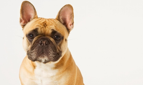 Dogs Trust offer advice on finding the right property for you and your pooch
