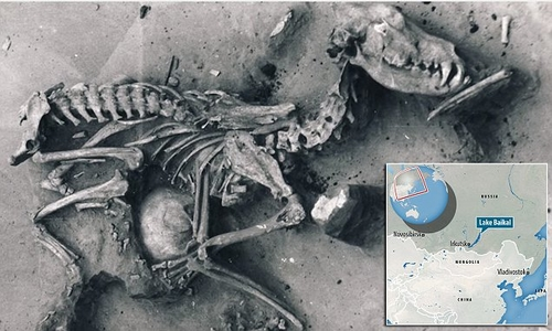 Dogs Trust comments on news that ancient remains prove dogs have always been man's best friend