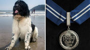 Remembering Whizz the marine rescue dog