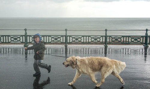 No matter the weather, dogs need to be exercised