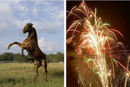 Dogs Trust calls for restrictions on the use of fireworks to help protect animal welfare