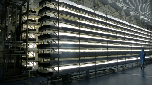 LED Lighting supporting mass vegetable growth