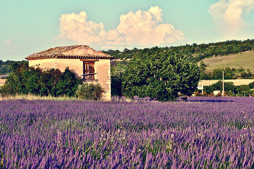 A home in sunny Provence