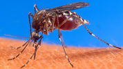 Might Oxitec hold the answer to the Zika crisis?
