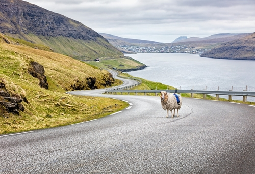 The latest frontiers of IoT - sheep mapping