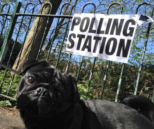 The power of the poll...and the pug!