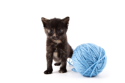 How to write the Purr-fect Social Media post