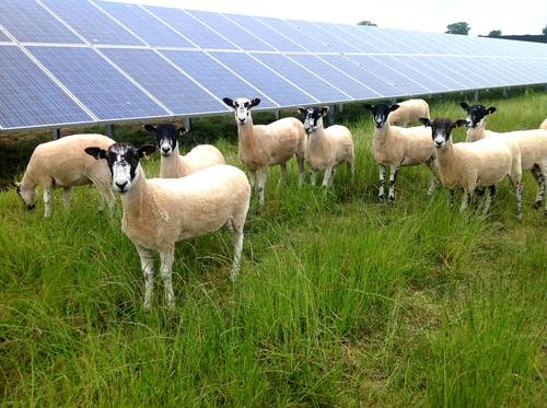 Farmers awaiting solar subsidy build pressure on Irish government