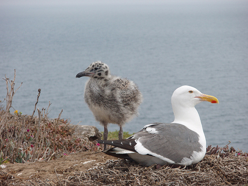 Piper - From Encouragement to Fulfilment - a simple film about a seagull