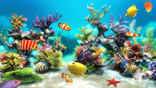 Does Your Office Need an Aquarium?
