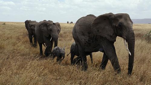 The elephant climbs on IBM Storage