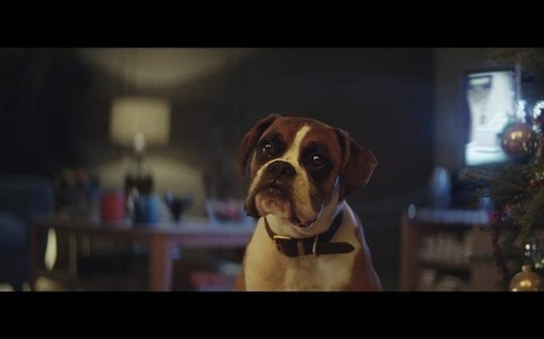 John Lewis Christmas Advert has landed! #BusterTheBoxer