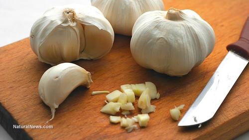 Garlic used to treat antibiotic-resistant urinary tract infections