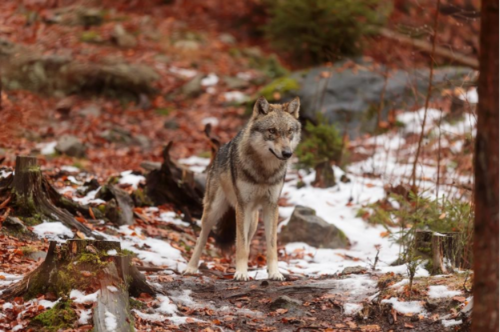 Track the Impact of Your Salesforce Campaign Like a Shadow Wolf