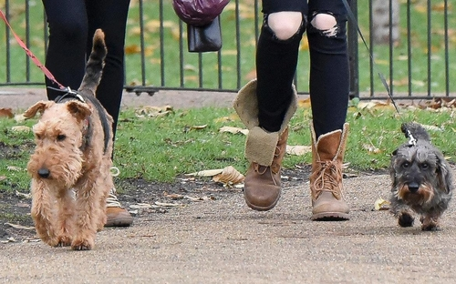 Cats and dogs in Westminster