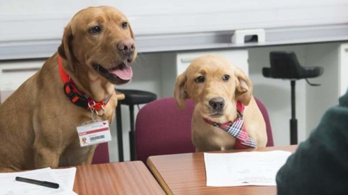 Are you dogged by interview nerves?