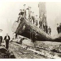 Image of 2008-025.009 - McFarlane & Hoover  Logging Contractors, Preston Mill Co.