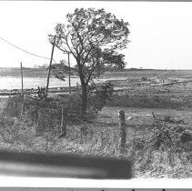 Image of P1986.067 - Beavertail Rd