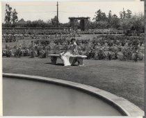Image of Municipal Rose Garden, San Jose, California