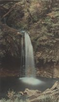 Image of 1997-208 - Big Basin Park Photograph Album