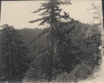 Image of 1997-208 - Big Basin Park Photograph Album