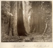 Image of 1979-2628 - Sempervirens Club Records