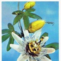 Image of 2013.120.465e - Postcard