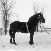 Image of FW_00237 - Man and a Horse, ca. 1900-1930