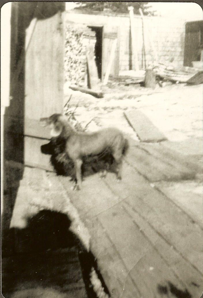 Sylvester Gott's dog, Peter, a mexican hairless dog