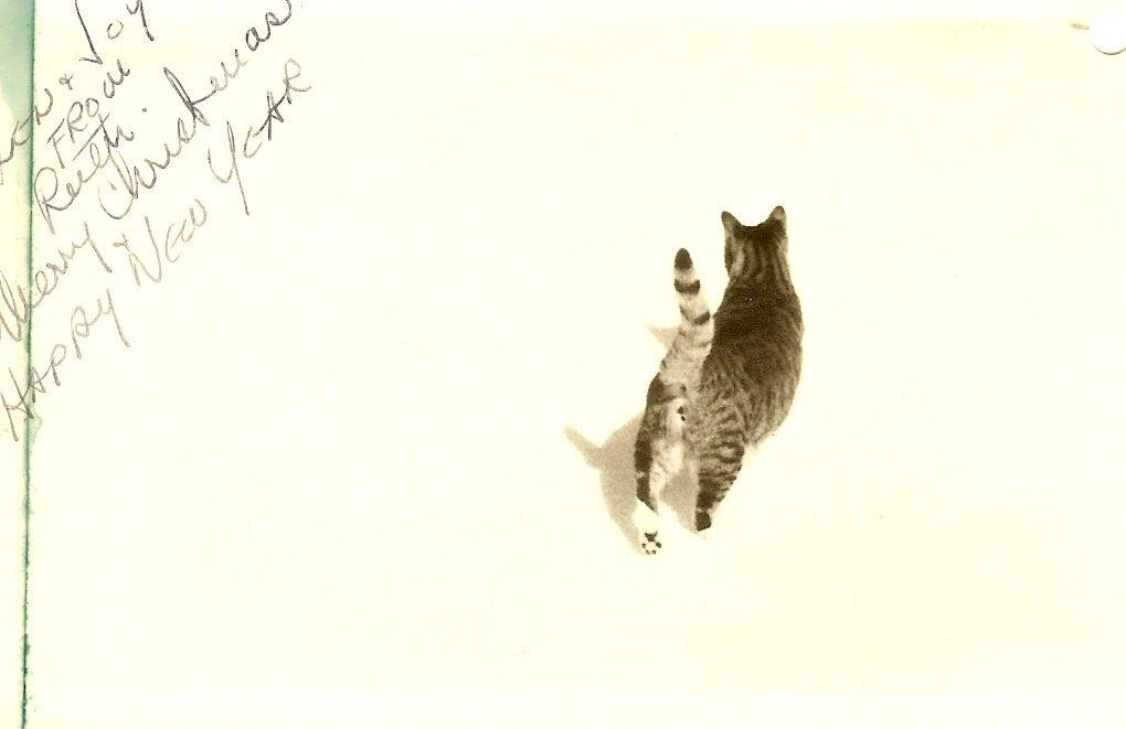 Ruth Moore & Eleanor Mayo's cat--Grigett