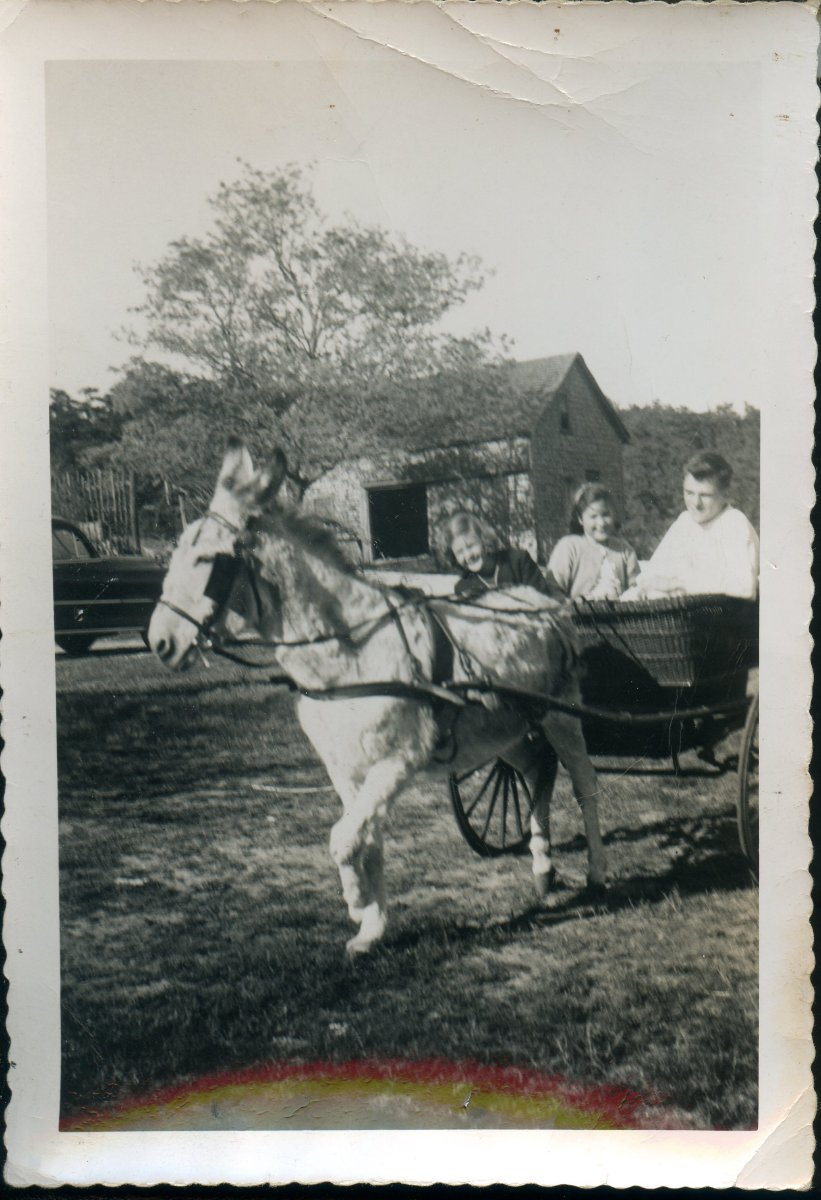 Young family in horse drawn cart, Wellfleet MA, May, 1950