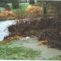 Image of Issaquah Creek After the 1990 Thanksgiving Storm -