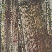 Image of Big Cedars Near Spokane, Wash -