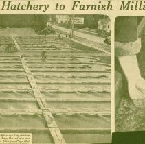 Image of News Clipping: New Issaquah Hatcher to furnish Millions of Salmon -
