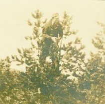 Image of May be Walt Trandum, In a Growth of Trees -