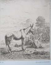 Image of P43 - Dujardin, Karel