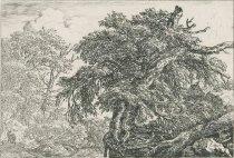 Image of P88 - Ruisdael, Jacob van