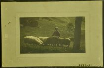 Image of 3570.21 Postcard