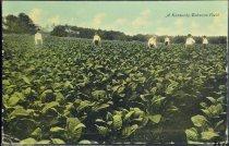 Image of 3570.248 Postcard