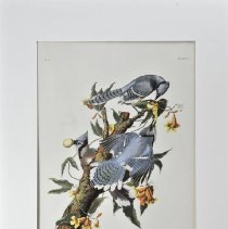 Image of Lithograph - Blue Jay