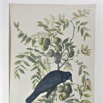 Image of Lithograph - American Crow