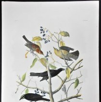 Image of Lithograph - Rusty Grackle