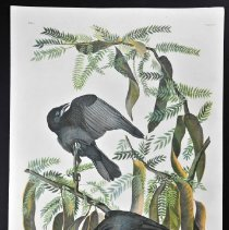 Image of Lithograph - Fish Crow